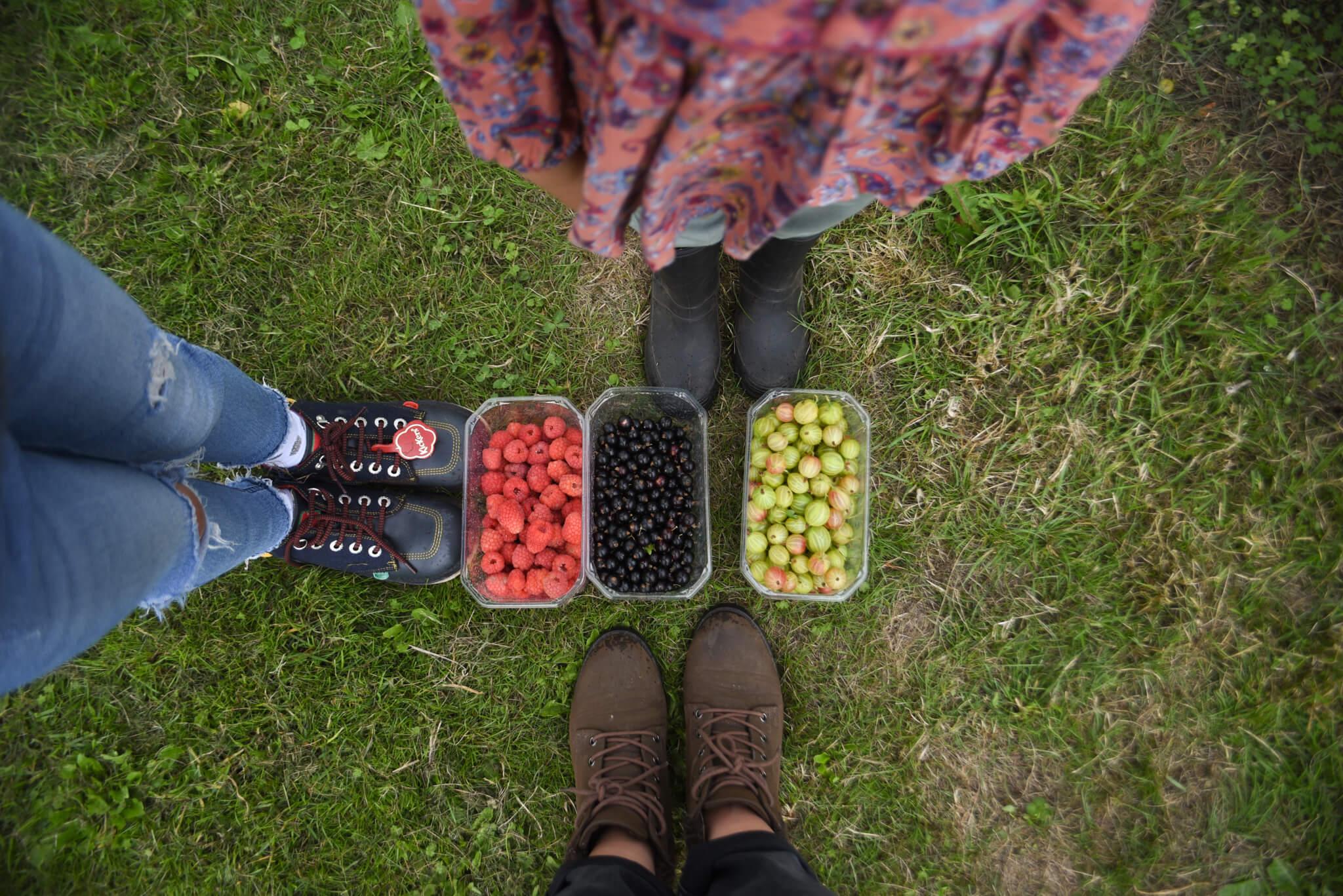 Scaddows fruit