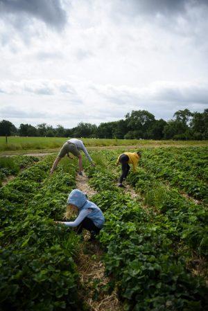 family fruit picking